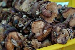 Dired mushroom at farmer market Stock Photos