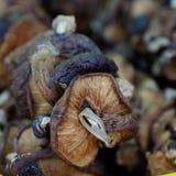 Dired mushroom at farmer market Stock Images