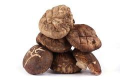 Dired Mushrooms Stock Image