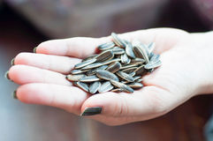 Dired sunflower seeds Royalty Free Stock Image