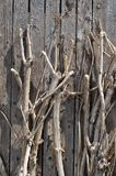Dired tree Stock Images