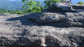 direito da corrediça 4k do rododendro à rocha de trás vídeos de arquivo