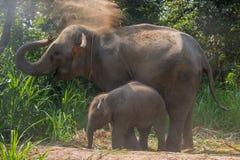 Direito novo do elefante ao lado de um adulto Imagem de Stock