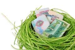 Dirham dei soldi dei UAE in un nido Immagine Stock Libera da Diritti