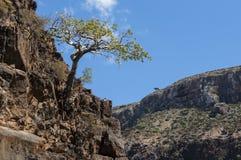 Dirhur Socotra, ö, Indiska oceanen, Yemen, Mellanösten Fotografering för Bildbyråer