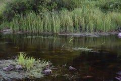 Dirigé au lac beaver - camp de plateau de Pocono - dans le Poconos photographie stock