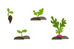Dirigez l'ensemble plat d'objets avec la croissance de plantes de phases Photographie stock