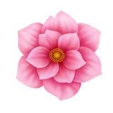 Dirigez l'illustration décorative de fleur rose d'anémone d'isolement sur le blanc Photographie stock libre de droits