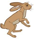 Dirigez l'illustration de coloré de lapin de lièvres d'isolement sur le fond blanc illustration libre de droits