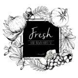 Dirigez l'illustration de couleur carrée de frontière des légumes frais Ensemble gravé par vintage tiré par la main de nourriture Photo stock
