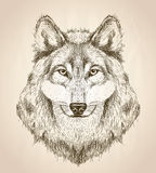 Dirigez l'illustration de croquis d'une vue de face de tête de loup Photos libres de droits