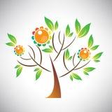 Dirigez l'illustration de l'arbre abstrait avec la feuille et le fruit colorés Image libre de droits