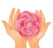 Fleur de Rose Image stock