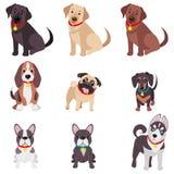 Dirigez l'illustration, ensemble de chiens de race drôles, sur un fond blanc Images stock