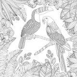 Dirigez l'illustration tropicale tirée par la main d'oiseau de toucan et de perroquet d'arums pour livre de coloriage adulte Croq illustration libre de droits
