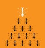 Dirigez l'image de l'des fourmis sur le fond orange Image stock