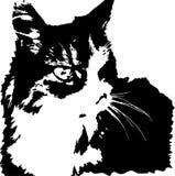 Dirigez l'image du chat norvégien semblant féroce de forêt illustration libre de droits