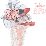 Dirigez l'oiseau drôle d'autruche de mode dans un beau chapeau Photo stock