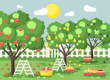 Dirigez la bande dessinée d'illustration moissonnant le jardin mûr de verger d'automne de fruit avec des prunes d'escabeaux, poir illustration de vecteur