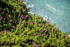 Dirigez la côte nationale de bord de la mer de Reyes sur l'océan pacifique Photographie stock libre de droits