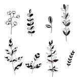 Dirigez la collection d'ensemble d'éléments de conception de feuilles noires et blanches Photos libres de droits