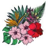 Dirigez la composition des fleurs tropicales tirées par la main, palmettes, usines de jungle illustration libre de droits