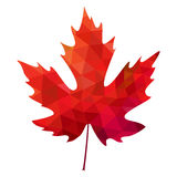 Dirigez la feuille d'érable rouge polygonale sur le fond blanc Image stock