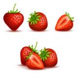 Dirigez la fraise douce et fraîche réaliste d'isolement sur le fond blanc Photos stock
