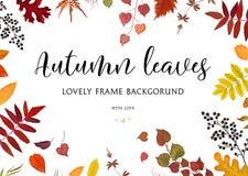 Dirigez la frontière florale d'automne de design de carte de style d'aquarelle, cadre : illustration stock