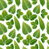 Dirigez la peinture du fond sans couture de modèle d'herbe verte avec tiré par la main Photos stock