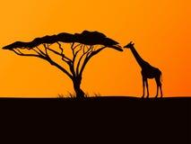 Dirigez la silhouette noire d'une girafe et d'un acacia Image stock