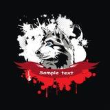 Dirigez la tête d'un chien de traîneau sibérien de chien dans un cadre Photo libre de droits