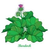 Dirigez le buisson du lappa de bardane ou d'Arctium d'ensemble, la feuille et le bureau ou la graine en vert d'isolement sur le f illustration de vecteur