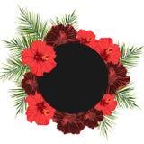 Dirigez le cadre foncé de cercle avec le fond de flovers de ketmie Photographie stock
