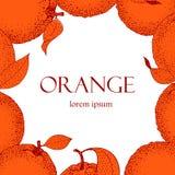 Dirigez le cadre tiré par la main avec des oranges dans le style de croquis Illustration de cru Images libres de droits