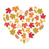 Dirigez le coeur fait de feuilles d'automne sur le fond blanc Image libre de droits