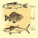 Dirigez le dessin de croquis de poissons - saumon, truite, carpe, thon illustration tirée par la main de fruits de mer Photos stock