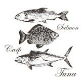 Truite de dessin illustration de vecteur image 42174837 - Croquis poisson ...