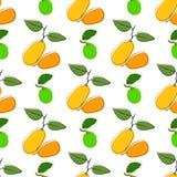 Dirigez le fond sans couture de modèle avec le kumquat et la chaux tirés par la main dans le style de vintage Sur le blanc Utilis illustration stock