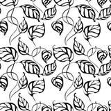 Dirigez le modèle sans couture avec la main dessinant les feuilles noires et blanches Photo libre de droits