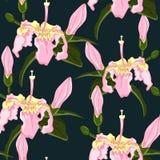 Dirigez le modèle sans couture de fond foncé avec les fleurs tropicales Photo libre de droits