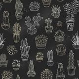 Dirigez le modèle sans couture des cactus et des succulents de craie Images stock