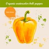 Dirigez le paprika jaune tiré par la main d'aquarelle avec des baisses d'aquarelle illustration stock