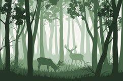 Dirigez le paysage avec les arbres verts dans la forêt et deux cerfs communs illustration de vecteur