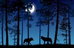 Dirigez le paysage de deux loups dans une forêt la nuit avec le bl foncé illustration stock