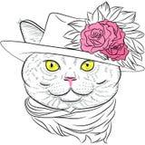 Dirigez le portrait de plan rapproché de la dame britannique de hippie de chat Photos libres de droits