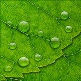 Dirigez les baisses de l'eau sur le fond vert d'instruction-macro de lame illustration de vecteur