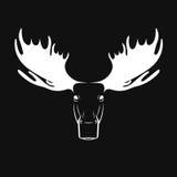 Dirigez les images de la tête de cerfs communs d'orignaux sur un fond noir Images stock