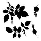 Dirigez les silhouettes de branches du briar avec des feuilles et des baies Images libres de droits