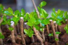 Dirija a jardinagem fotografia de stock royalty free